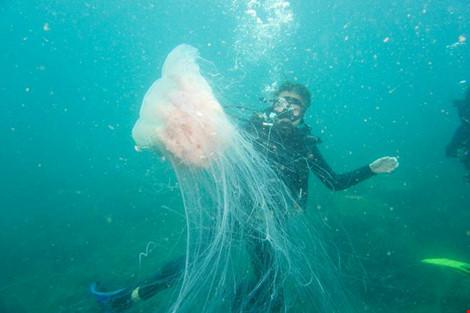 Biển Cù Lao Chàm tuyệt đẹp dưới ống kính du khách - 6