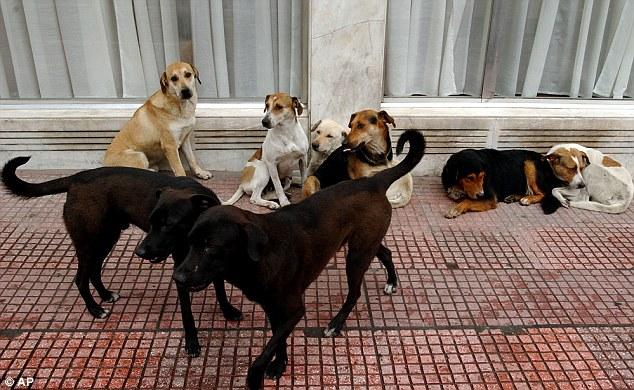 100 con chó hoang cắn xé bà mẹ Ấn Độ - 2