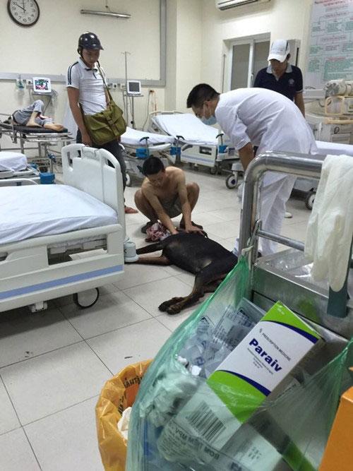 Clip: Chú chó bị đâm vào cổ gây xôn xao Hà Nội - 2