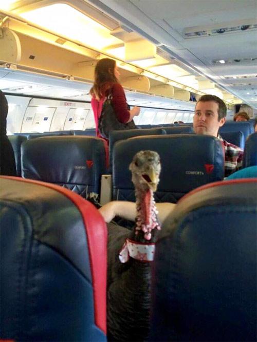 """""""Chạy mất dép"""" khi gặp những vị khách này trên máy bay - 4"""