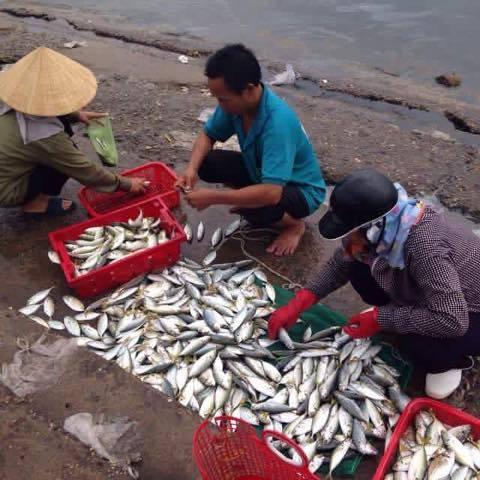 Tin mới nhất về kết quả kiểm nghiệm cá ở miền Trung - 1