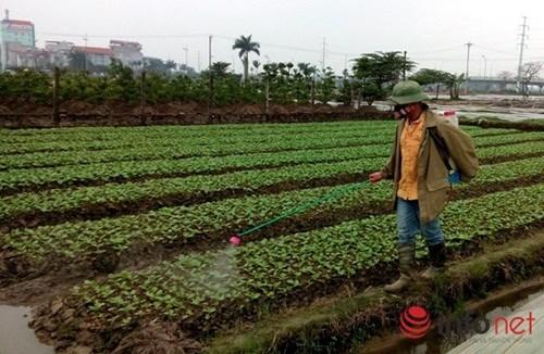 Phun hơn 100 tấn thuốc sâu TQ vào rau, hỏi sao người Việt không bị đầu độc? - 1