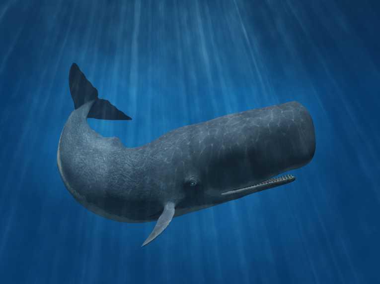 Anh: Nhặt được chất nôn cá voi bán giá gần 2 tỉ đồng - 4