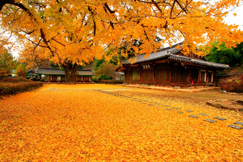 Quyến rũ thu vàng thành phố Busan - 1