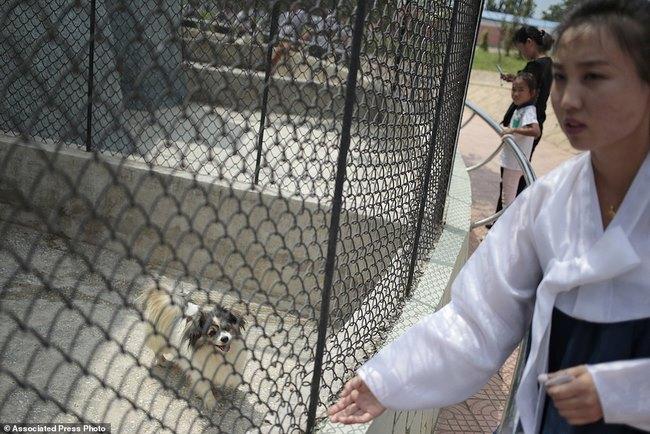Vườn thú Triều Tiên trưng bày chủ yếu…chó - 1