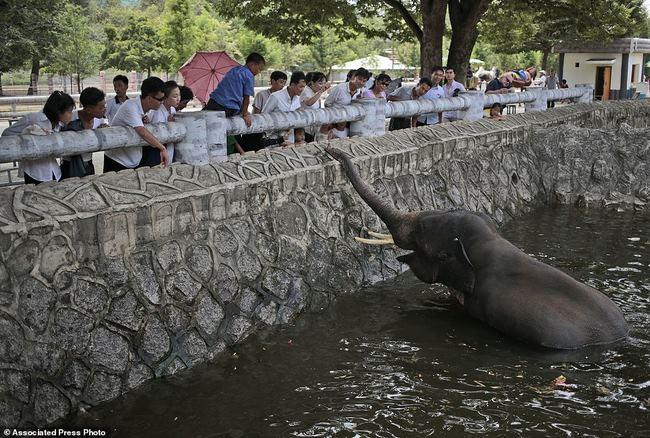 Vườn thú Triều Tiên trưng bày chủ yếu…chó - 6