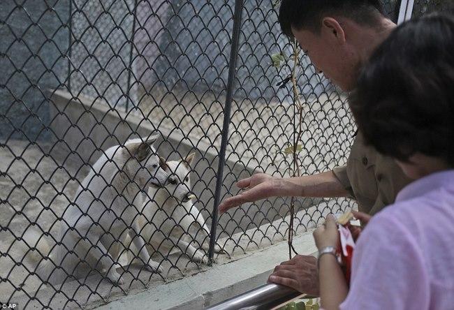 Vườn thú Triều Tiên trưng bày chủ yếu…chó - 3