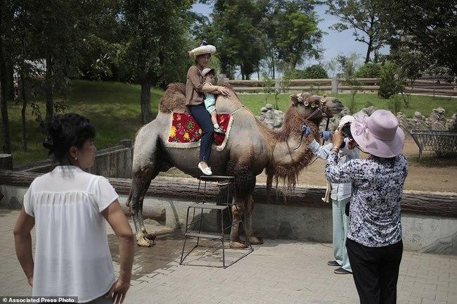 Vườn thú Triều Tiên trưng bày chủ yếu…chó - 4