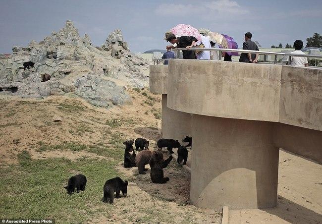 Vườn thú Triều Tiên trưng bày chủ yếu…chó - 5