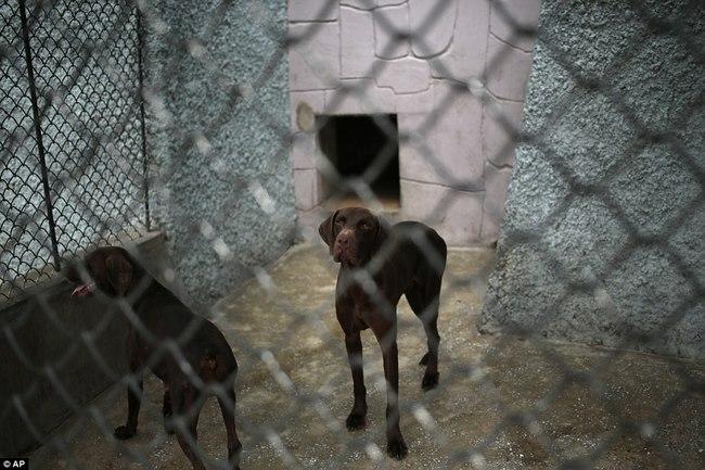 Vườn thú Triều Tiên trưng bày chủ yếu…chó - 2