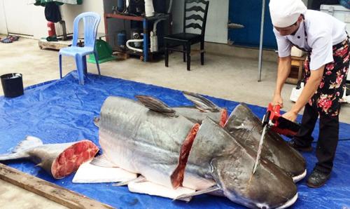 """Cận cảnh xẻ thịt cặp """"thủy quái"""" ở Sài Gòn - 2"""