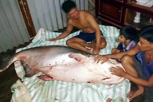 """Cận cảnh xẻ thịt cặp """"thủy quái"""" ở Sài Gòn - 9"""