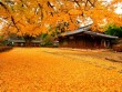 Quyến rũ thu vàng thành phố Busan