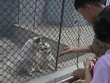 Vườn thú Triều Tiên trưng bày chủ yếu…chó