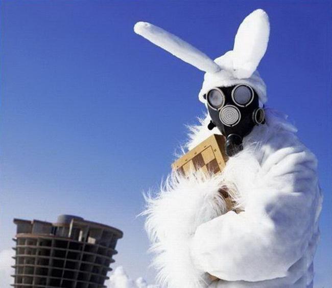 Thỏ trắng không quen môi trường nên phải đeo mặt nạ khí.