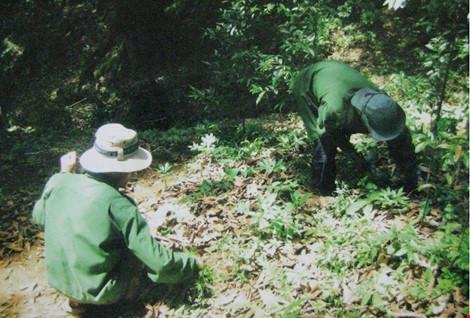 Sâm Ngọc Linh là 'tài sản' sở hữu của Quảng Nam và Kon Tum - 1