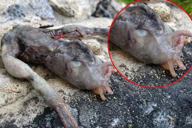 Tìm thấy sinh vật nhầy nhụa với 2 chân kì dị ở Na Uy - 2