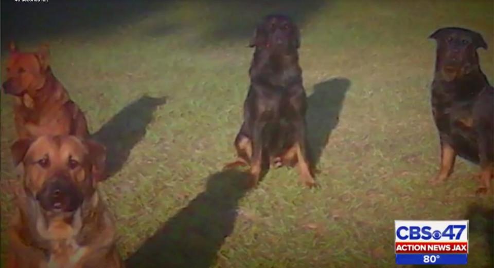 Mỹ: Kinh hoàng đàn chó tấn công, ăn thịt ông cụ 83 tuổi - 1