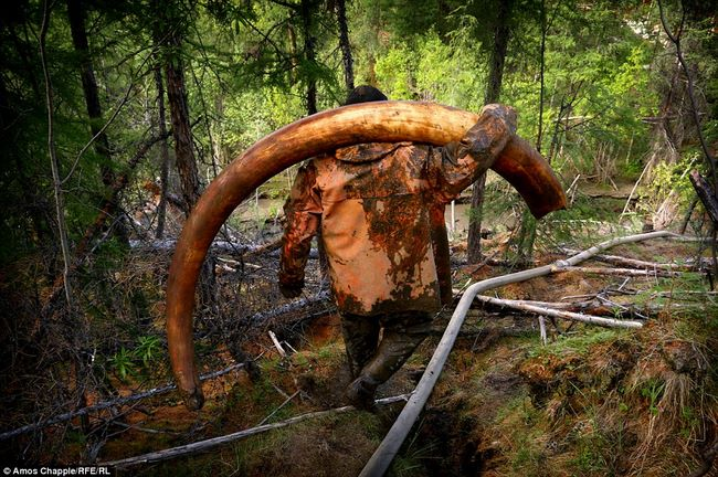 Thâm nhập thế giới ngầm đào ngà voi ma mút đi bán ở Nga - 1