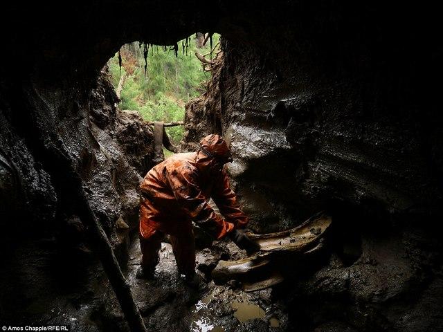 Thâm nhập thế giới ngầm đào ngà voi ma mút đi bán ở Nga - 3