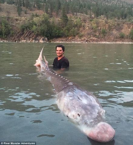 """Bắt được cá """"mõm lợn"""" dài 3m nặng 3 tạ ở Canada - 1"""