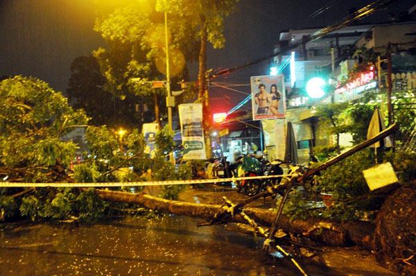 Kỳ lạ cây xanh bật gốc 7 lần ở Sài Gòn - 2