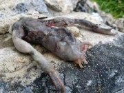 Phi thường - kỳ quặc - Tìm thấy sinh vật nhầy nhụa với 2 chân kì dị ở Na Uy