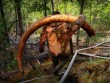 Thâm nhập thế giới ngầm đào ngà voi ma mút đi bán ở Nga