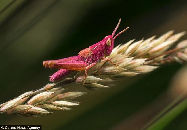 Ảnh: Chiêm ngưỡng những con vật có màu sắc dị thường - 1