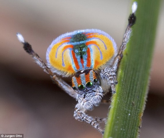 Ảnh: Chiêm ngưỡng những con vật có màu sắc dị thường - 6