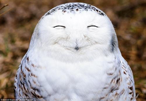 Những khoảnh khắc hài hước trong thế giới động vật - 1