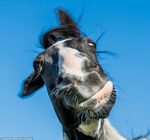 Những khoảnh khắc hài hước trong thế giới động vật - 2