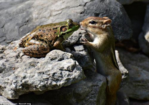 Những khoảnh khắc hài hước trong thế giới động vật - 14