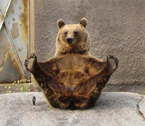 Học chó mèo tập yoga thư giãn cuối tuần nào! - 3