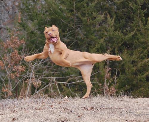 Học chó mèo tập yoga thư giãn cuối tuần nào! - 7
