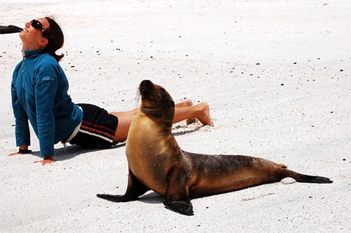 Học chó mèo tập yoga thư giãn cuối tuần nào! - 13