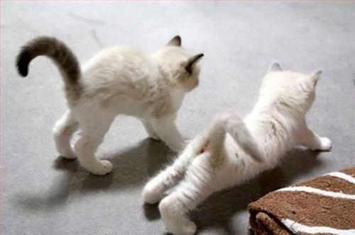Học chó mèo tập yoga thư giãn cuối tuần nào! - 11