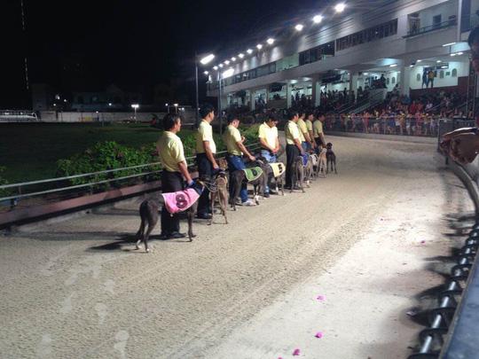Chớp thời cơ mở trường đua ngựa - 1