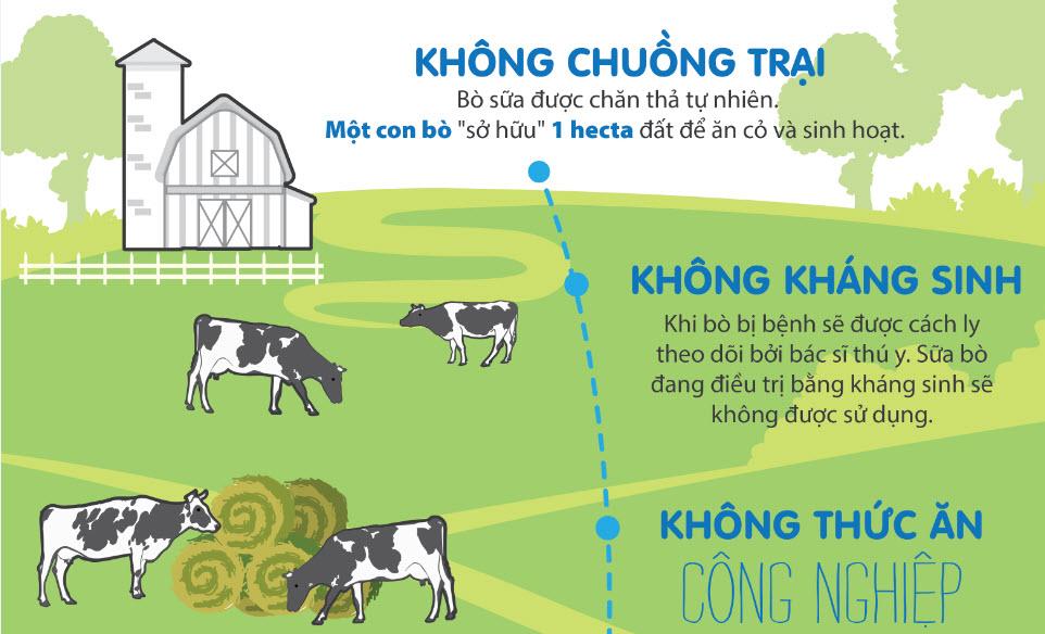 """Cuộc sống """"Năm Không"""" của đàn bò nông trại thung lũng Goul Burn - 2"""