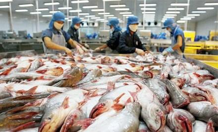 Cẩn trọng khi tăng xuất khẩu cá tra sang Trung Quốc - 1