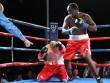 Boxing: Giáo viên tiểu học bất bại 14 trận, 13 knock-out