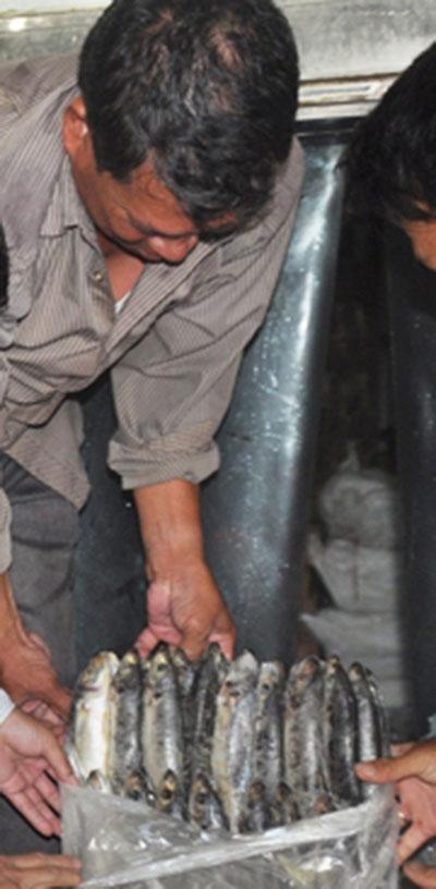 Hải sản miền Trung tồn kho gần 4.000 tấn - 1