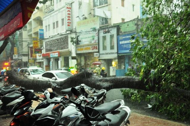 Cổ thụ lại bật gốc, đè người đi đường giữa Sài Gòn - 2
