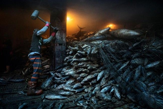 Nguồn tài nguyên lớn nhất ở Biển Đông sắp biến mất - 9