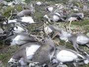 Thế giới - Ảnh: 300 con tuần lộc bị sét đánh chết la liệt ở Na Uy