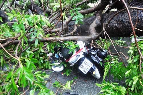 Cây đổ đè chết người ở Sài Gòn: Lỗi tại thời tiết! - 2