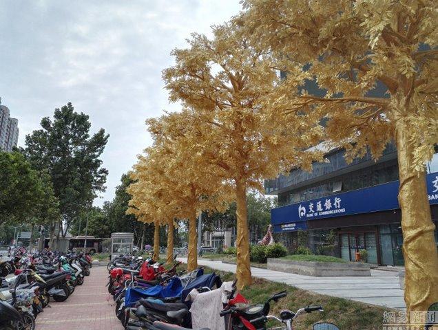 Lóa mắt với hàng cây bọc vàng ròng trên phố - 3