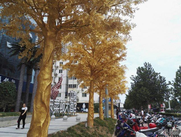 Lóa mắt với hàng cây bọc vàng ròng trên phố - 5