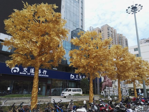 Lóa mắt với hàng cây bọc vàng ròng trên phố - 2