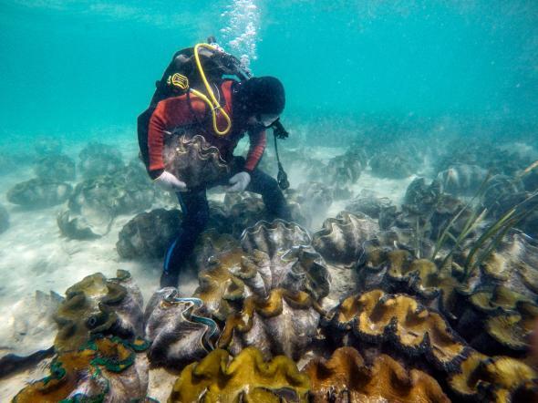 """Lý do dân TQ """"cố sống cố chết"""" săn sò khổng lồ Biển Đông - 2"""